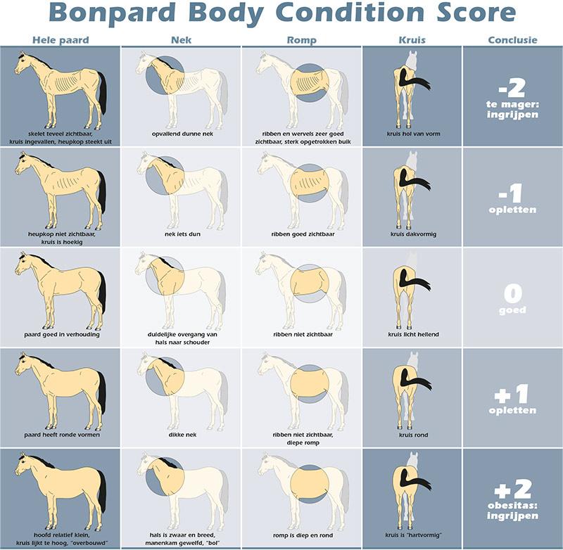 bonpard-veterinair-speciaalvoeder-body-condition-scorecard-2