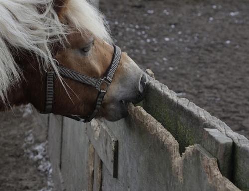 Je paardenvoer is niet meer te koop, wat nu?!