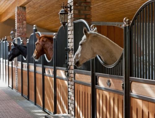 Paarden op stal gezond houden
