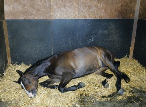 koliekgevoelige paard