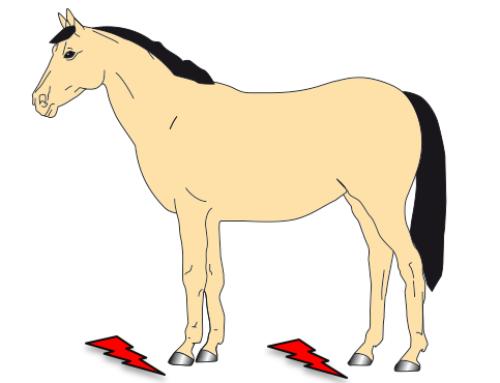 Wacht je op hoefbevangenheid, of zet je je paard nu op dieet?