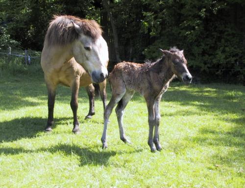 Bonpard Mare&Foal goed voor merrie en veulen :)
